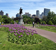 The Boston Public Garden with the skyline of Boston's Midtown beyond